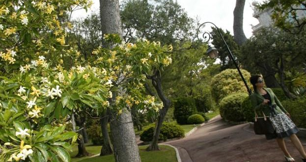 Five Gardens of Monaco- one of the gardens of the principality