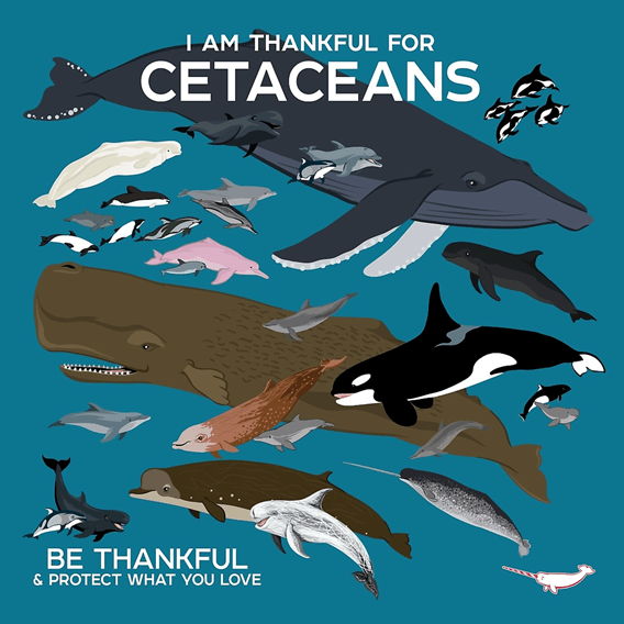 Cetaceans is a family of marine mammalswhich include whales, dolphins and porpoises