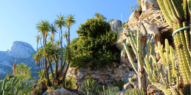 New construction planned for the jardin exotique for Jardin exotique monaco