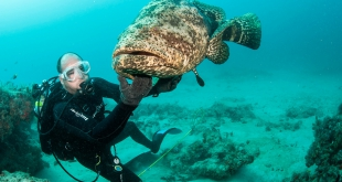 grouper and diver