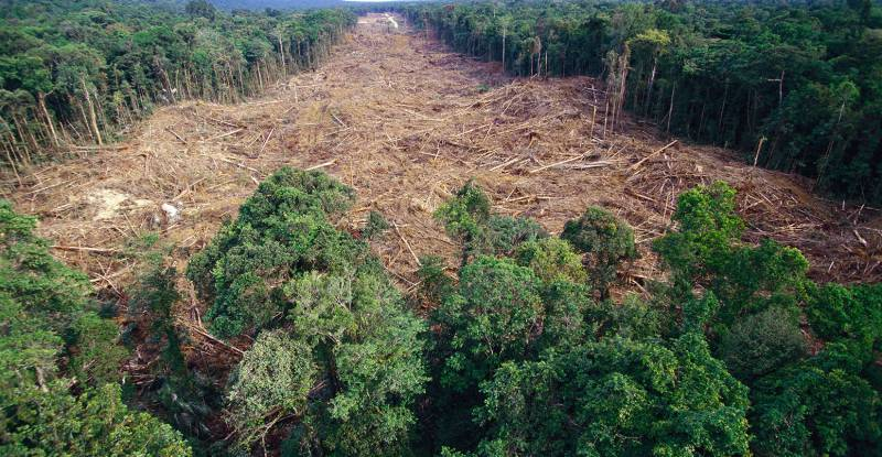 Wood Charter: Monaco's Commitment Against Deforestation