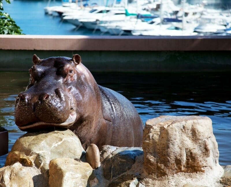 Monaco Zoological Gardens