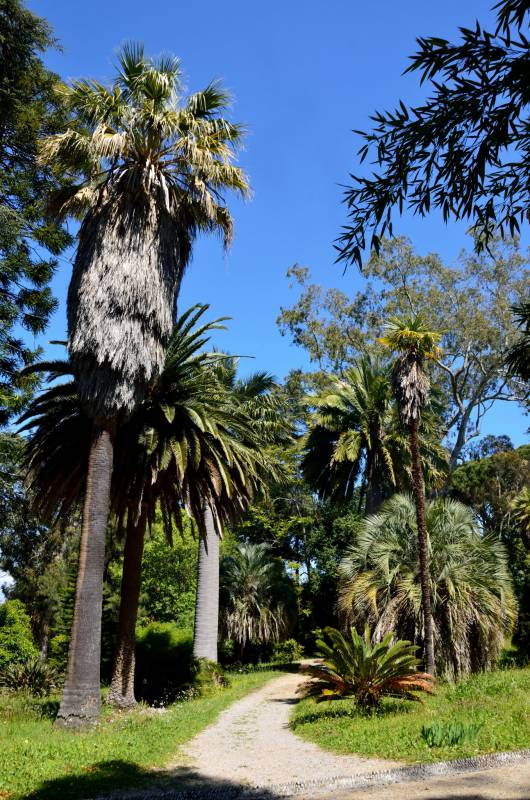 Jardin Thuret