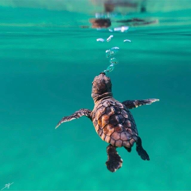 """Oceanographic Museum: Sea Turtle Day and """"Turtle Odyssey"""" Grand Festival"""