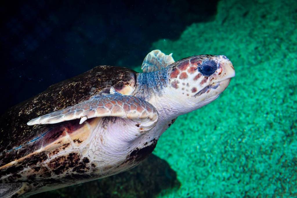 Monaco's New Home for Sea Turtles