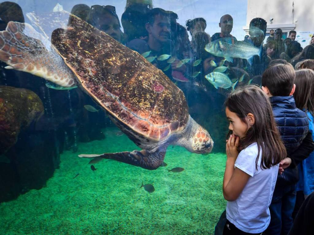 Monaco's New Home for Sea Turtles