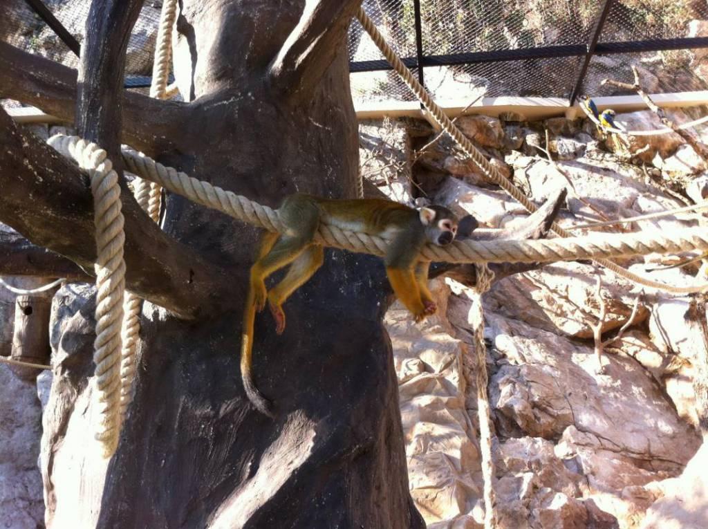 Monaco's Zoological Garden Reopens