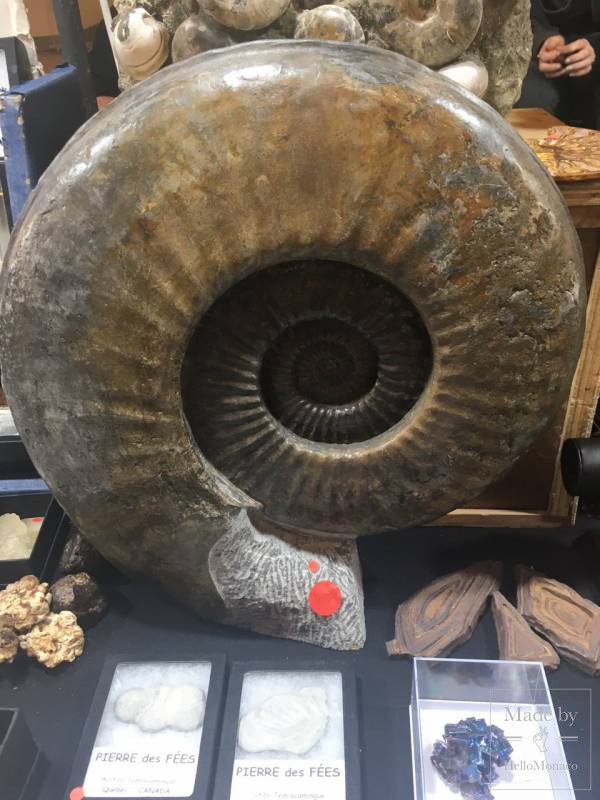 Mineral Expo Monaco: Gems, Meteorites and Fossils From Our Planet and Outer Space