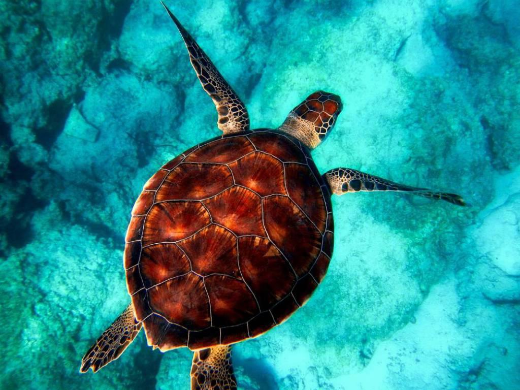 The Monaco Ocean Protection Challenge