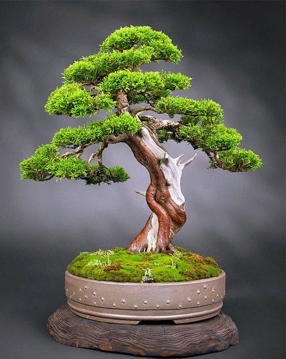 Bonsai club in Monaco