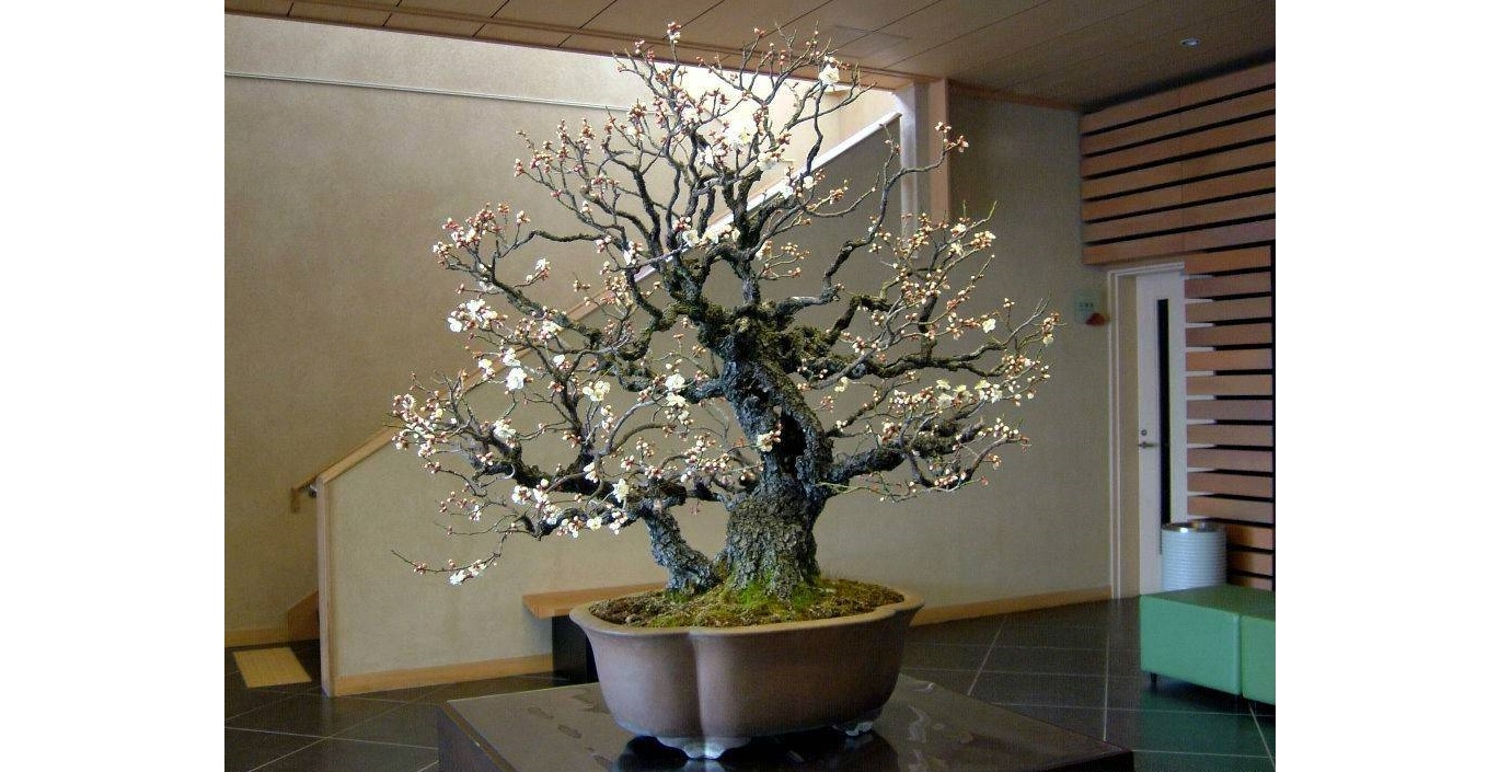 Photo of BONSAI FAN CLUB IN MONACO: GATEWAY TO HAPPINESS