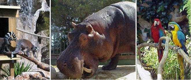 Photo of Monaco zoo or that's where the hippo lives