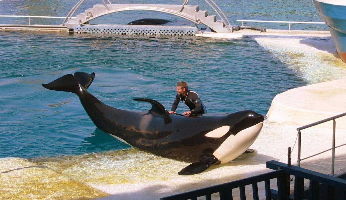 Photo of Marineland reacts to France's new ban on breeding dolphins in captivity