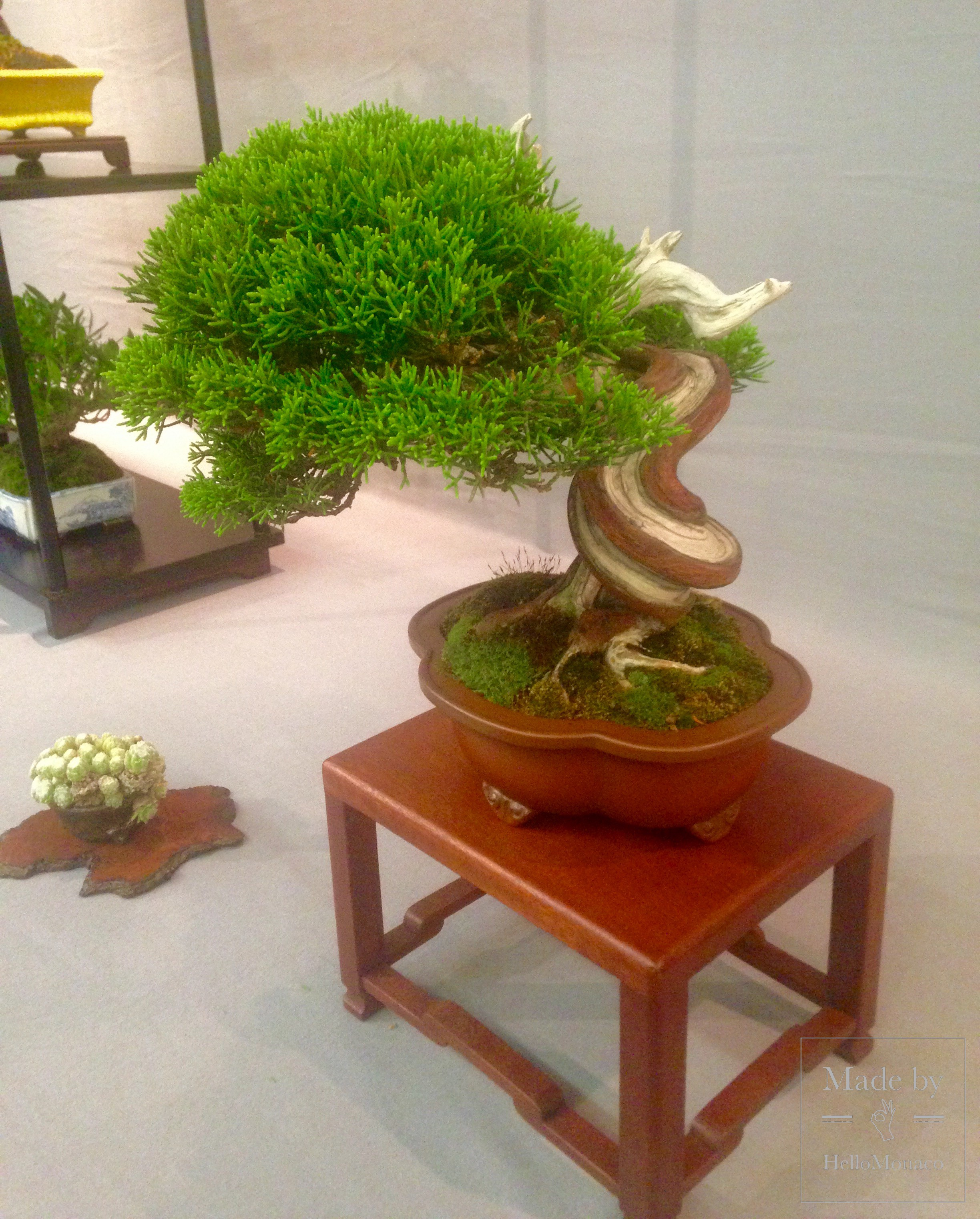 Monaco Bonsai Expo 2017