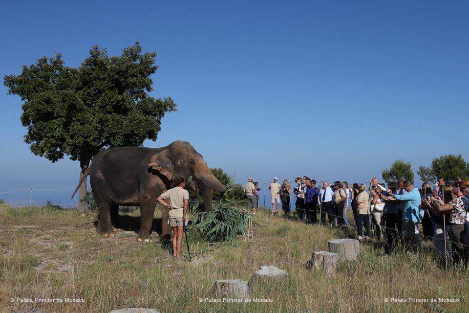 Princess Stephanie visits elephants