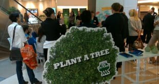 Plant Ahead: the Trillion Tree Campaign
