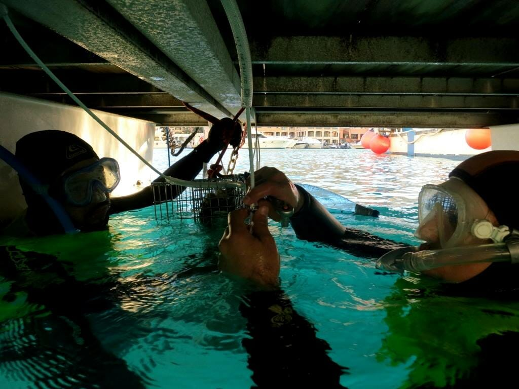 Installing Biohut Ecocean Monaco
