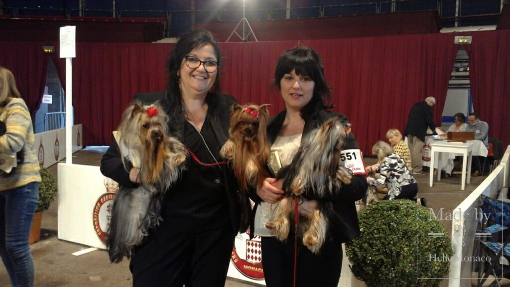 Photo of 91st Monaco International Dog Show: top-class dogs on a prestigious Monegasque Red Carpet