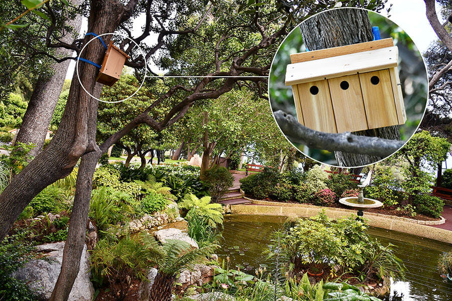 Photo of Bird Conservation: Installing nesting boxes in Monaco
