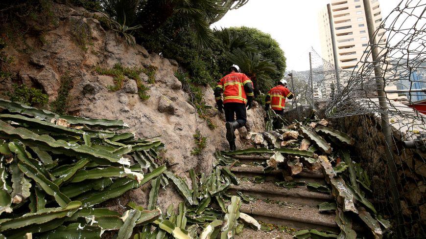 Cactus Accident Monaco