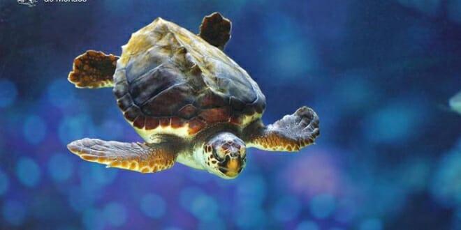 Rana, Monaco's Injured Turtle
