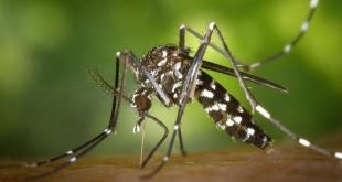 Монегасков призывают к бдительности по отношению к желтолихорадочным комарам