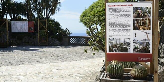 Cactus & Succulentes, Francis Hallé