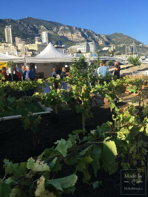 La Route du Gout - Eat Well and eat Healthily in Monaco