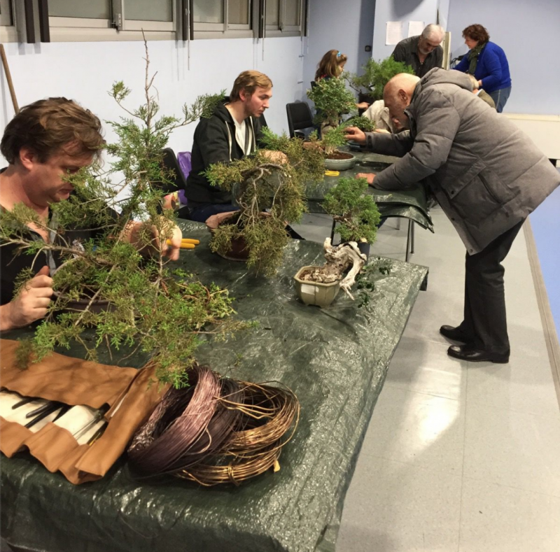 Bonsai Club of Monaco put the beautiful bonsai in the spotlight
