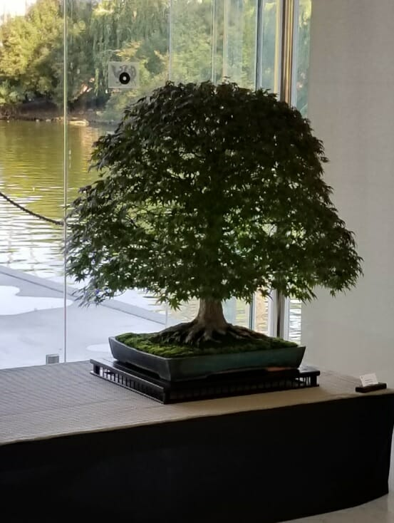 Bonsai Club of Monaco