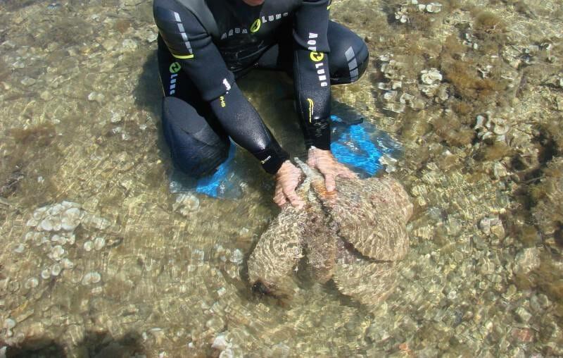Fan Mussels diver