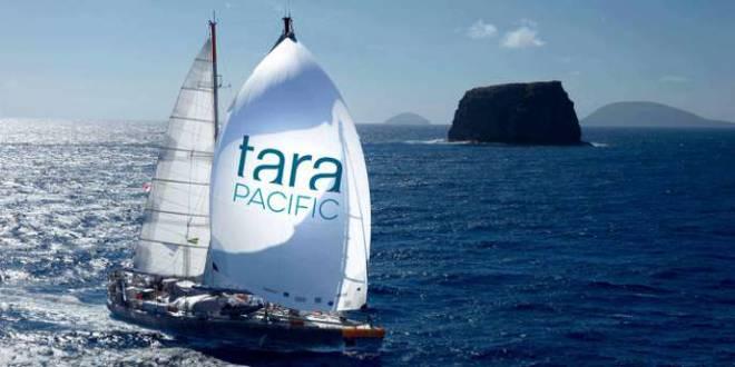 Судно Tara Pacific успешно окончило экспедицию