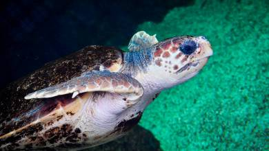 Photo of Monaco's New Home for Sea Turtles