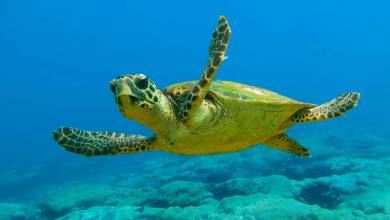 Photo of Protecting Mediterranean Biodiversity with MedFund and other Monaco news