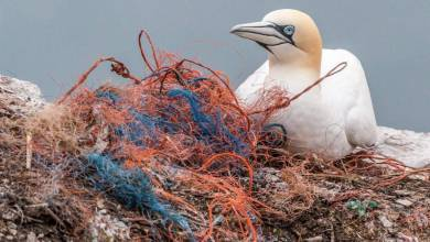 Photo of BeMed launches a call for projects to reduce plastic pollution on Mediterranean islands
