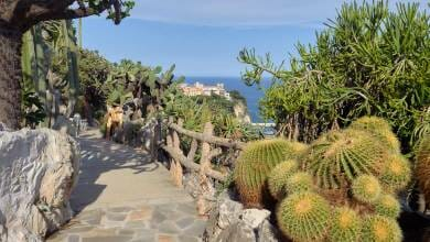 Photo of Exotic Garden under Renovation for 2021 and other Monaco news