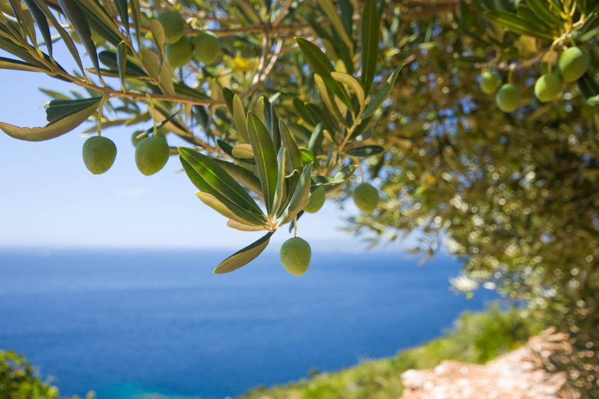 Close to 1000 Monaco Births a Year Celebrated with a Gift of Olive Trees