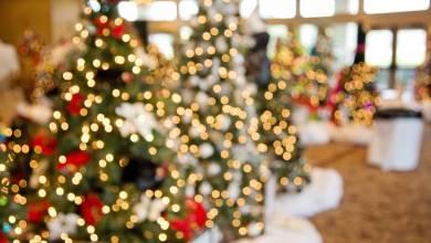 Photo of Help Light up Monaco's Christmas Tree