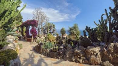 Photo of Exotic Garden under Renovation for 2021