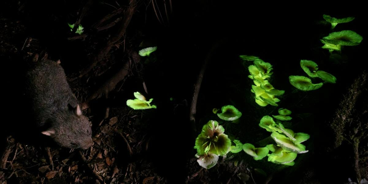 FPA2 Environmental Photography Award calls for humanity's attention to vulnerable Beauty of Nature