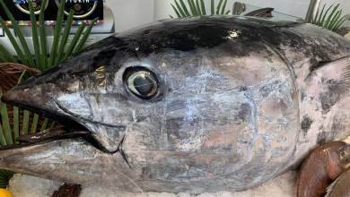 Photo of A fisherman from Monaco caught a 113 kg tuna and other Monaco news