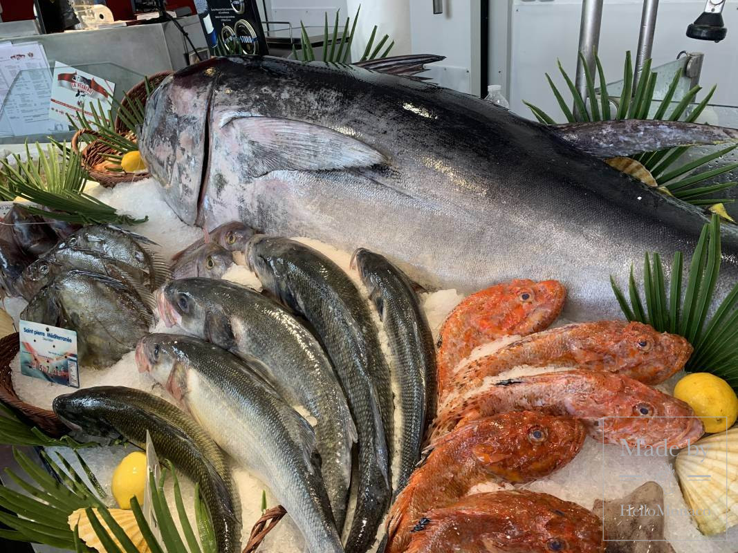 a fisherman from Monaco caught a tuna weighing 113 kg