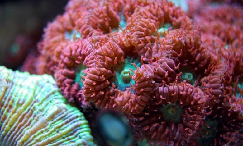 Red Coral in Port Hercule