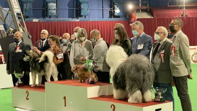 Photo of Monaco International Dog Show: a special gift for starred furry friends