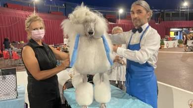 Photo of Monaco International Dog Show and other Monaco news